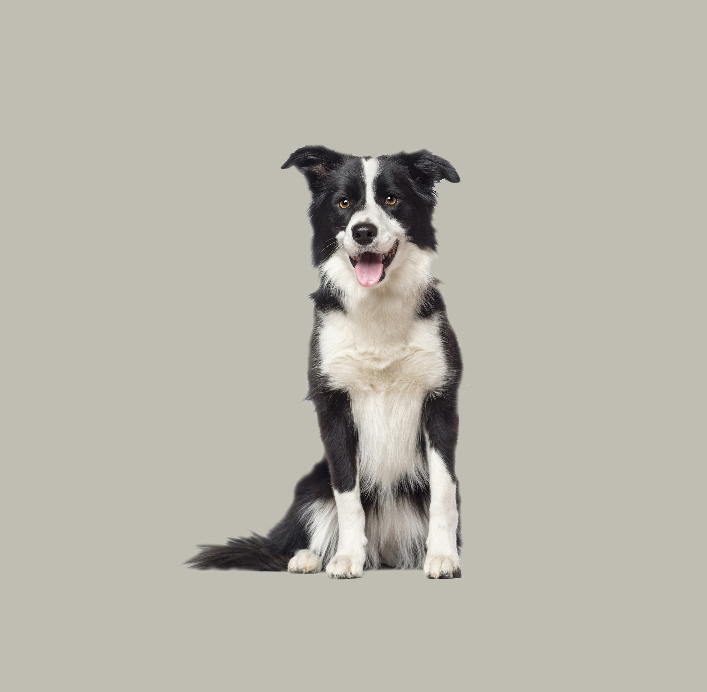 Treatments for Dogs - McDowell's Herbal Treatments