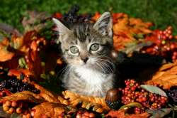 fall-kitty-250.jpg