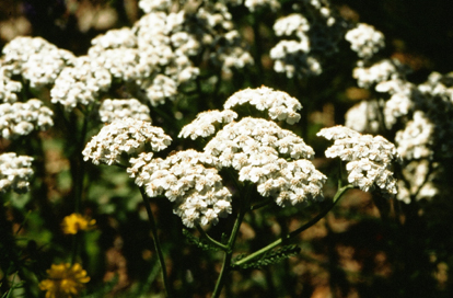 Plantar Warts Topical Herbal Treatment - McDowell's Herbal Treatments