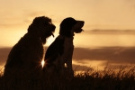 bigstock-Friends-At-Sunset-64297-150x100