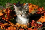 Fall-Kitty-150x100