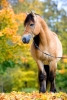 Beautiful-horse-is-standing-in-67x100